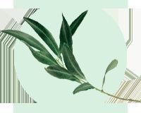 huile végétale d'olive