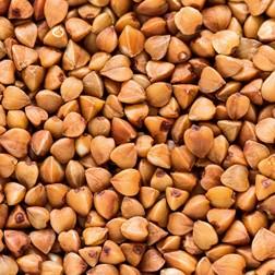 Extrait de sarrasin : propriétés actif cosmétique naturel BIOVIVE